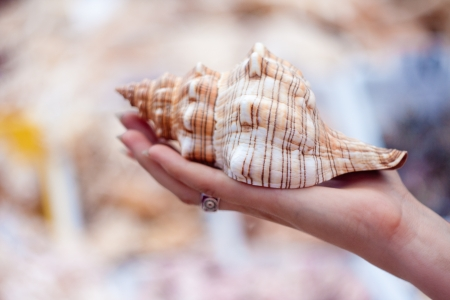 beach shell held in hand in a tropical place