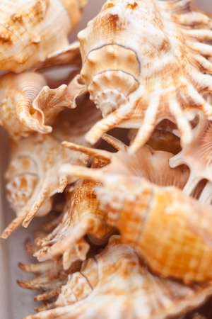 A collection of nice seashells for backgrounds photo