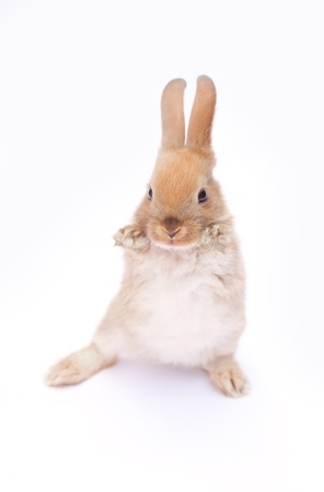 rad fluffy sweet rabbit on white background