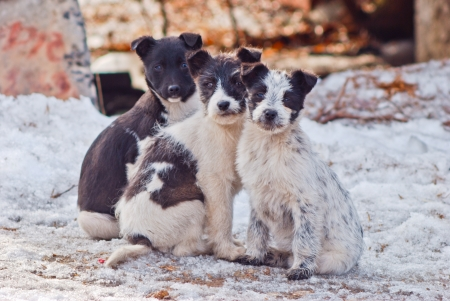 three  nice  homeless puppies  sitting together outdoor