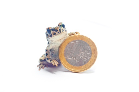 various coins and crazy frog Stock Photo - 15047828