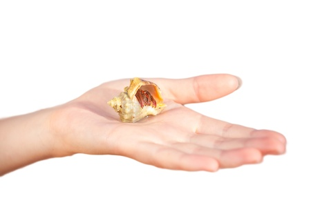 nice little Hermit crab crawling on hand