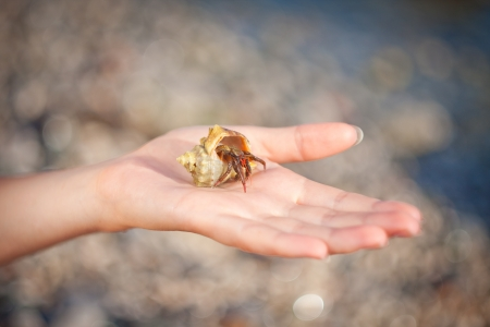 nice little Hermit crab crawling on hand photo