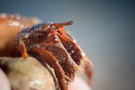 nice little Hermit crab crawling on photo