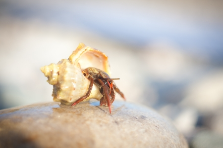 nice little Hermit crab crawling on the beach gravels photo