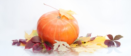 a pumpkin  isolated on white, autumn background Stock Photo - 16863668
