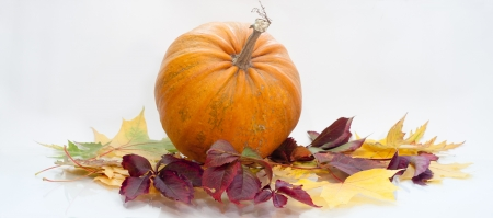 a pumpkin  isolated on white, autumn background Stock Photo