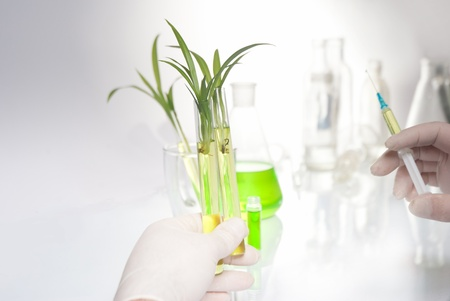 hand holding a plant with syringe in it photo