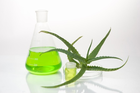 acemannan: aloe vera plant with tubes - herbal medicine Stock Photo