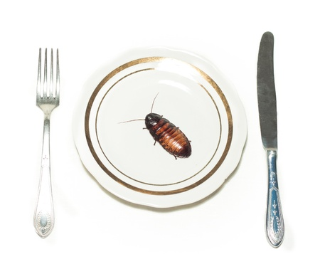 white plate with cockroach on white background Stock Photo