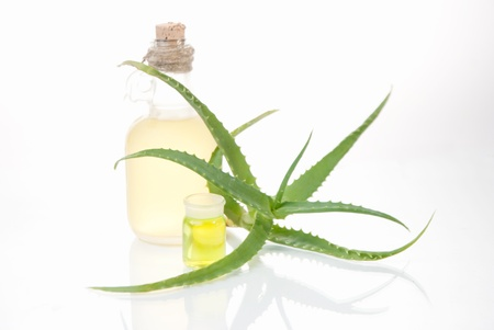 houseplant aloe with sheet of paper