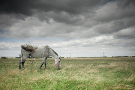 boundless: Two horses grazing in a field Stock Photo