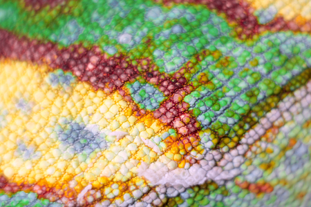 Macro view of colorful scales of Panther Chameleon isolated on white photo