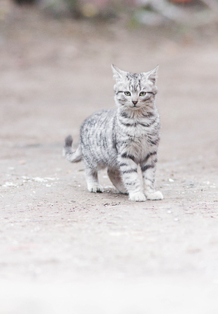 little cat on the street photo