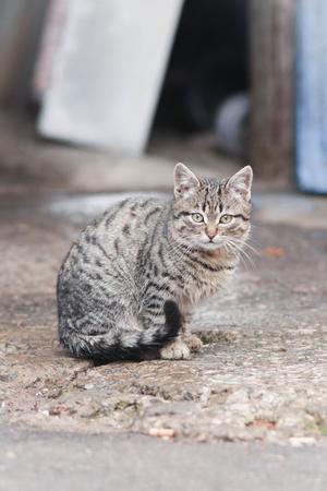 little cat on the street