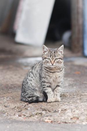 little cat on the street photo