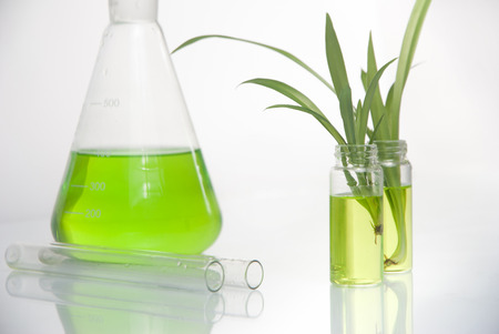 Green plant in laboratory  on white background Standard-Bild