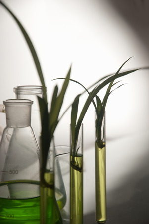 nurseling: plantlet in the tube in lab