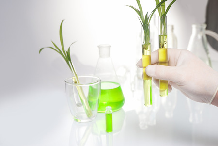hand holding a plant with syringe in it