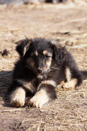 Cute little  puppy sitting photo