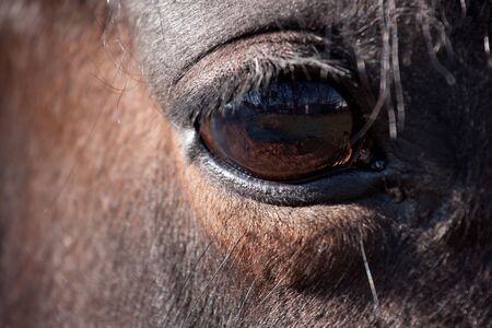 a horse eye Stock Photo
