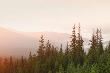 View on mountain forest in evening sunset