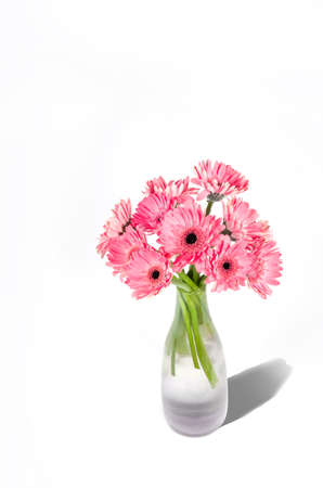Pink gerbera flowers in vase isolated on white background Standard-Bild