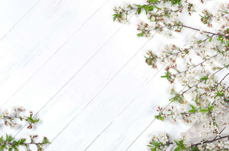 Fresh cherry blossom on white painted wooden planks. Copy space Standard-Bild