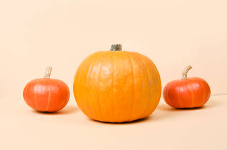 Three halloween orange pumpkins on bright yellow background Standard-Bild