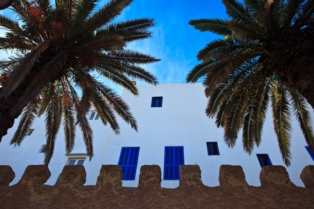 Essaouira, Morocco: Whitewashed exterior wall with blue windows and palm trees , Essaouira, Morocco