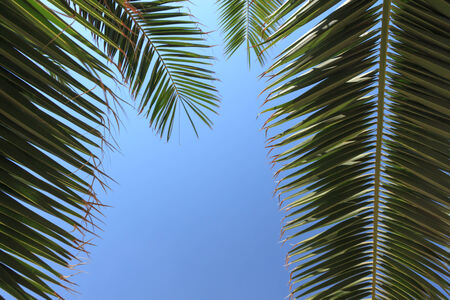 encircling: palm leaves encircling a blue sky left out as copy space Stock Photo