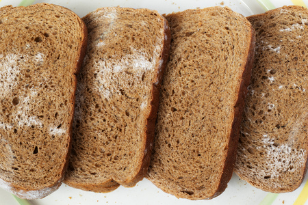Sliced rye bread covered with mold is placed on the table with a white background. Bread lies on a plate. Photo view from above.
