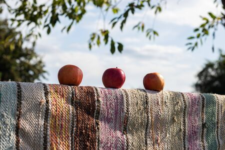 On the fence, which is covered with multi-colored sackcloth, are three ripe apples against the sky.