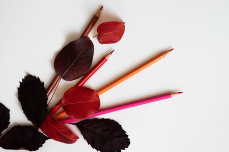 Four pencils - brown, red, orange and pink lie on a white background. They are covered with autumn leaves.