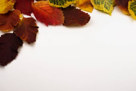 Red, yellow and green autumn leaves on a white background. View from above. Stockfoto