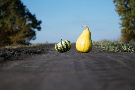 On a dirt road, two decorative little pumpkins. One yellow pumpkin, another pumpkin is green. Along the edges of the road are trees.