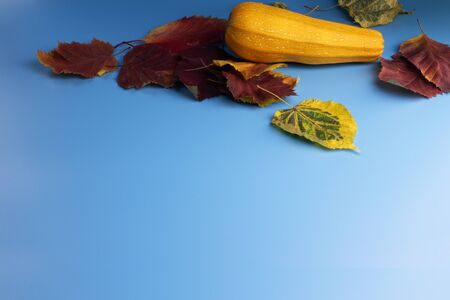 On a blue background are red, yellow and green autumn leaves and a yellow zucchini.