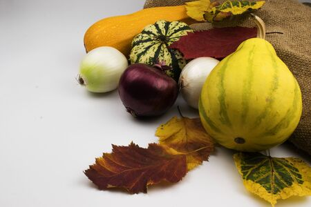 On a white background, red, yellow and green autumn leaves along with vegetables, which are zucchini, two decorative pumpkins, squash and onion heads.Near burlap.