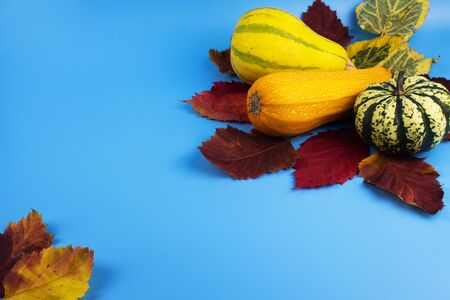 On a blue background, red, yellow and green autumn leaves along with vegetables which are zucchini and two decorative pumpkins.
