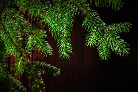 Spruce green branch with backlighting on a wooden brown background. Stock Photo