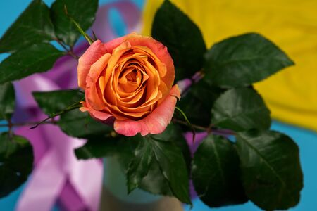Beautiful tea rose on a blue background with a lilac ribbon and a yellow shred. Stock Photo
