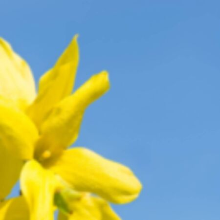 Blurred background with yellow flowers bright blue sky. EPS10 Vector illustration. Ilustracja