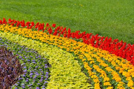 Fragment flowerbeds with bright multicolored flowers on a background of green grass. Shooting on a sunny day. Stock Photo