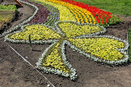 Works on laying of flowerbeds with bright multicolored flowers. Shooting on a sunny day. Zdjęcie Seryjne