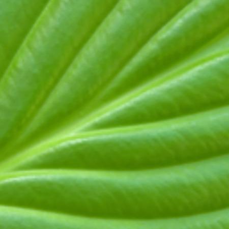 Blurred background green leaf closeup. Ilustracja