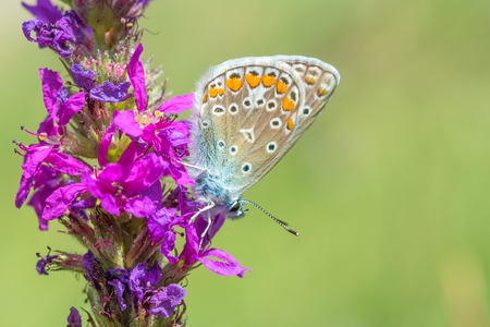 Butterfly on a pink flower. Blurred green background. Close-up.