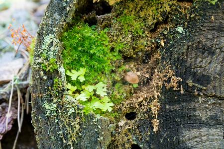 Varied moss and mushroom on an old tree stump close-up. Standard-Bild