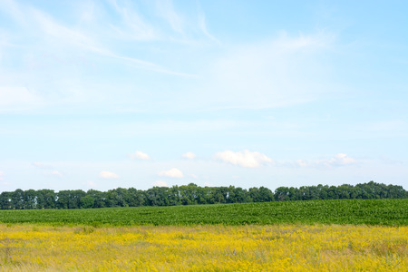 Yellow green field against the blue sky. Beautiful rural landscape. Zdjęcie Seryjne - 66551139