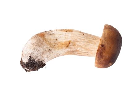 Fresh forest mushroom cep isolated on white background photo