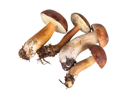 four freshly picked mushroom isolated on white background photo